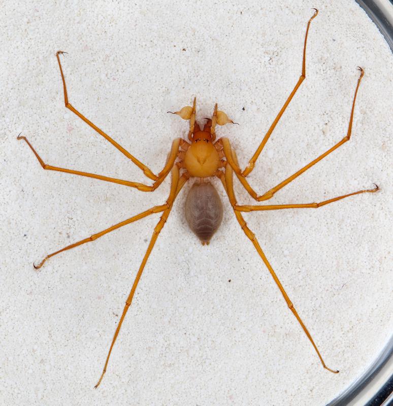 New spider found in Oregon