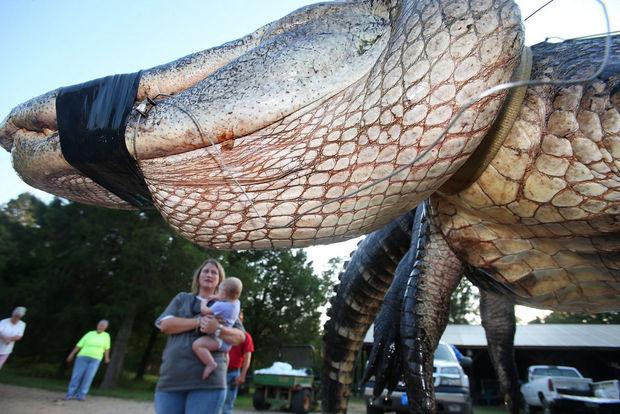 Gator12