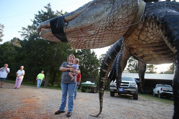 Gator22