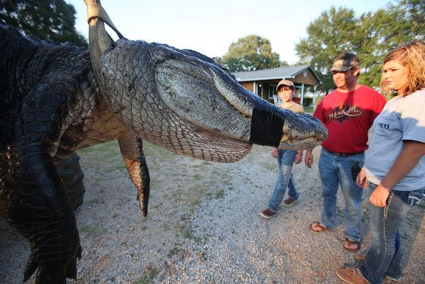 Gator24
