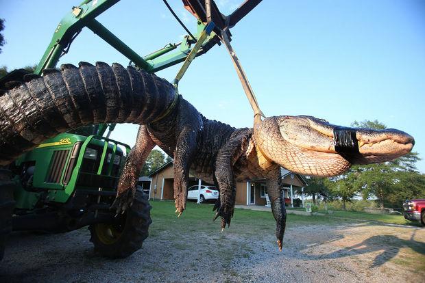 Gator27