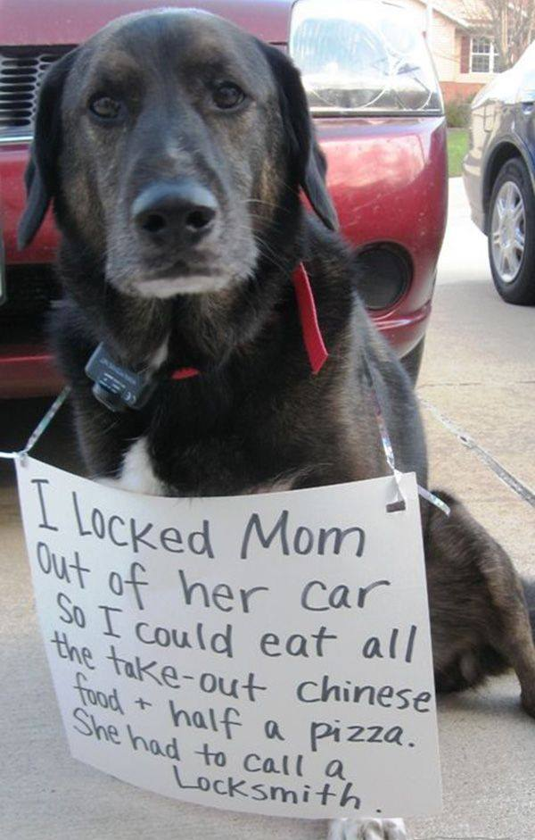 Stupid Dog Owner Made Sign Blaming Dog For Her Mistakes